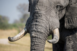 Maßnahmen gegen illegalen Handel von Wildartenprodukten