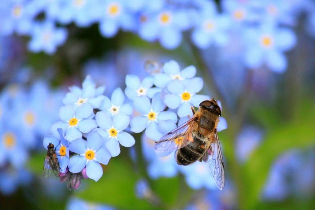 Biodiversität und Artenvielfalt