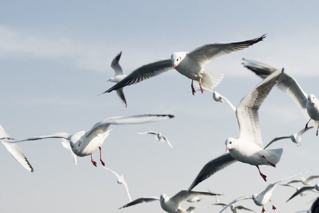 Artenvielfalt bei Vögeln