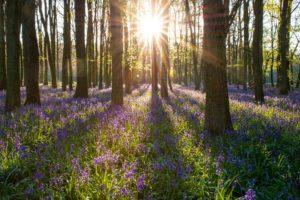EIZ Rostock berichtet über Artenvielfalt
