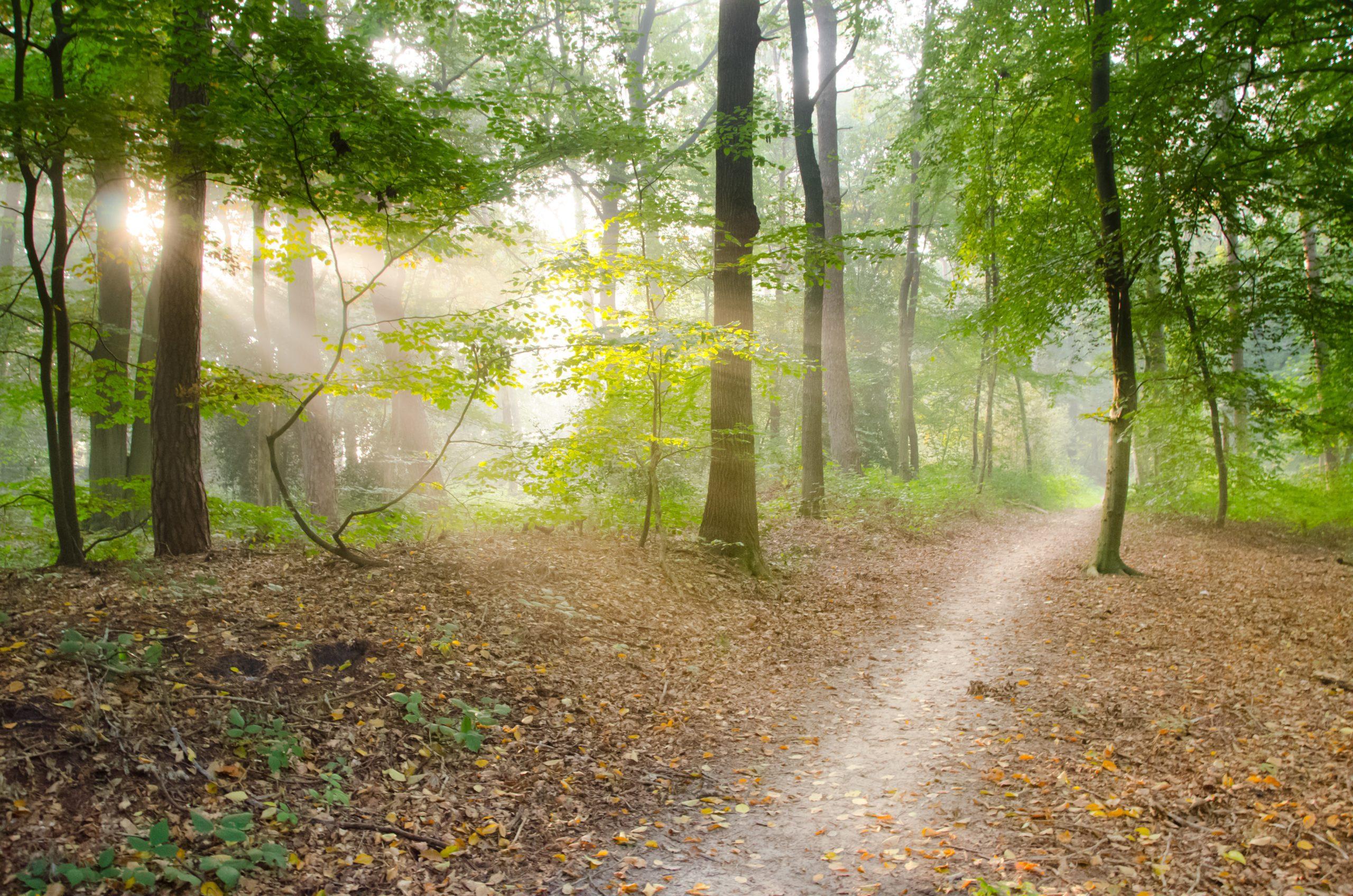 Treffpunkt Wald – Ein Praxis-Kurs für Waldspaziergänge