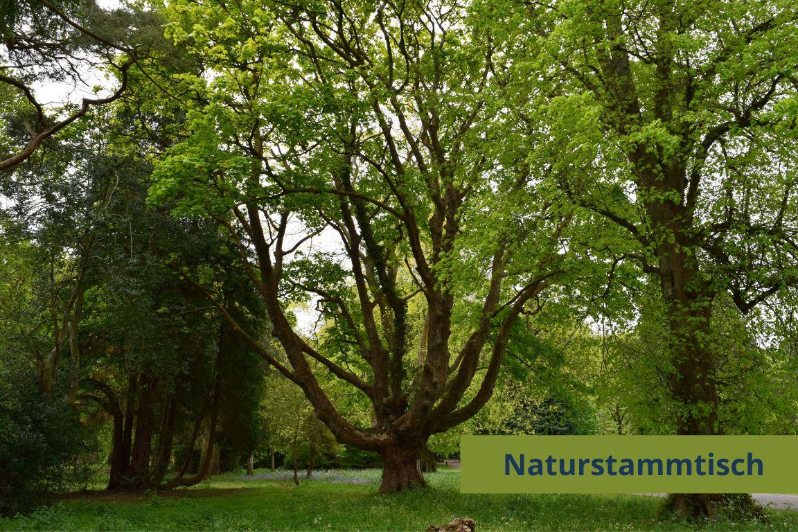 Die Vielfalt der Bäume!